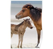 """Watching Over"" - wild horses on beach Poster"