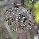 Spider Web in the Sun by Jeff Ore
