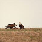 Bald Eagles Feeding by J. L. Gould
