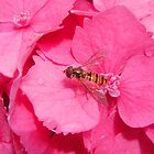 And Now For Some BRIGHT Pink, With a Visitor! by Sandra Cockayne