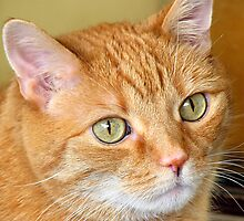 Cat Close-Up by Usha Ganesh