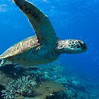 Turtle look / Emma M Birdsey by Emma M Birdsey