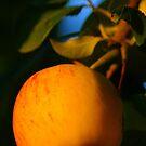 Apple in the Sun by Hilary Walker