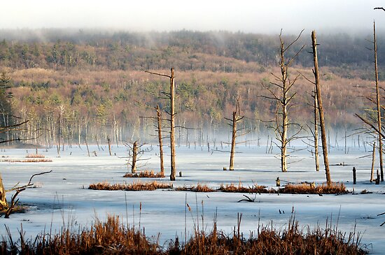 Frozen Swamp by smalletphotos