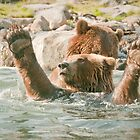 """Score!"" - brown bears playing by John Hartung"
