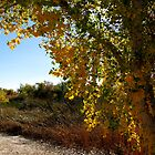 Autumn in Arizona by Kimberly Chadwick