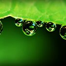 Water Drops x 6 by BobbiFox