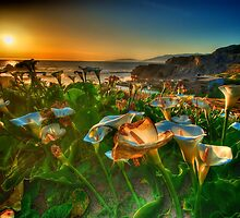 Sutro Baths San Francisco by Oliver Gunasekara