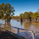 Murrumbidgee River In Flood 2 by rudolfh