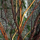 Tangles; vines encroaching on tree by mypic
