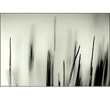 Abstract Moss Photographic Print