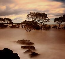Steppin Stones by Yvonne Mitchell