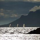 Sails on the Bay by solena432
