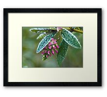 Dressed in ice crystals Framed Print