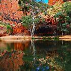 Ormiston Gorge by Gwynne Brennan