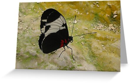 Butterfly and stone colors by ienemien