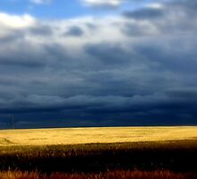 A stormy day over golden wheat Fields by Chris Chalk