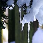Icicles by dawnandchris