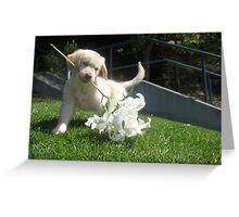 ViVi & Her White Lily Greeting Card