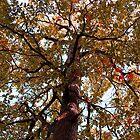 The Tree by Milena Ilieva