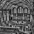 Natural History Museum B/W HDR  by larry flewers