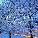 Trees Snowy Trees by HELUA