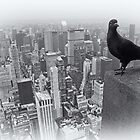 Pigeon's View  by Dilshara Hill