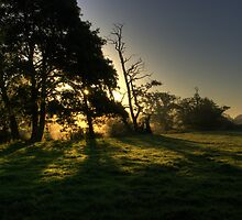 Sunrise through Alders on the Brett by Christopher Cullen