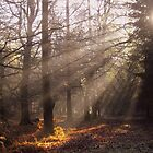 Morning Sunrays by Sally J Hunter