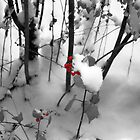 Winter Berries - Black and White by Graciela Maria Solano