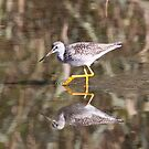 Greater Yellowlegs by Dennis Cheeseman