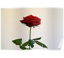 Ruby Red Rose Poster