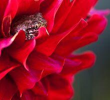Frog Flower by Lianne Wooster