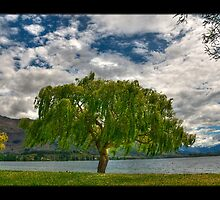 Beneath The Dreaming Tree by The Jonathan Sloat