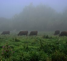 Cattle on the Brett watermeadows by Christopher Cullen