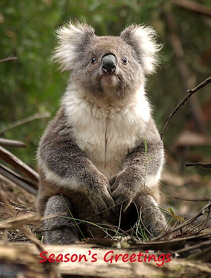 Koala in the Forest #4 - Australia by Bev Pascoe