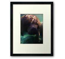 Florida Manatee Framed Print