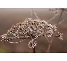Frozen stars  Photographic Print