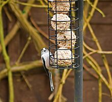 Long-Tailed Tit by VoluntaryRanger