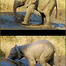 HAD ENOUGH OF THIS MUDBATH, OOPS! SERIES: # UPCLOSE AND PERSONAL WITH ELEPHANTS IN MAPUNGUBWE! by Magaret Meintjes