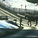 Draft Horse Crossing by Geno Rugh