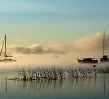Fog Rising by Diana Nault