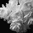 Jonquils in black and white by PenelopeLawry