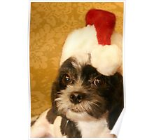 Merry Christmas from one Shih Tzu to another Poster