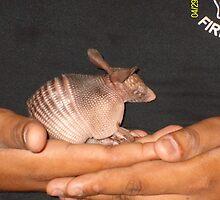 baby armadillo by neldia