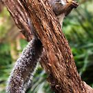 Squirrel Tree 2 by PhotographerAri