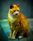 Street Cat in Istanbul by kutayk