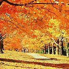 fall at Maymont park by ANNABEL   S. ALENTON