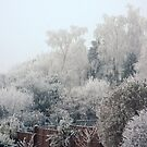 Shrouded in white, crisp, frost by missmoneypenny