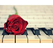 Red Rose on a Piano Photographic Print